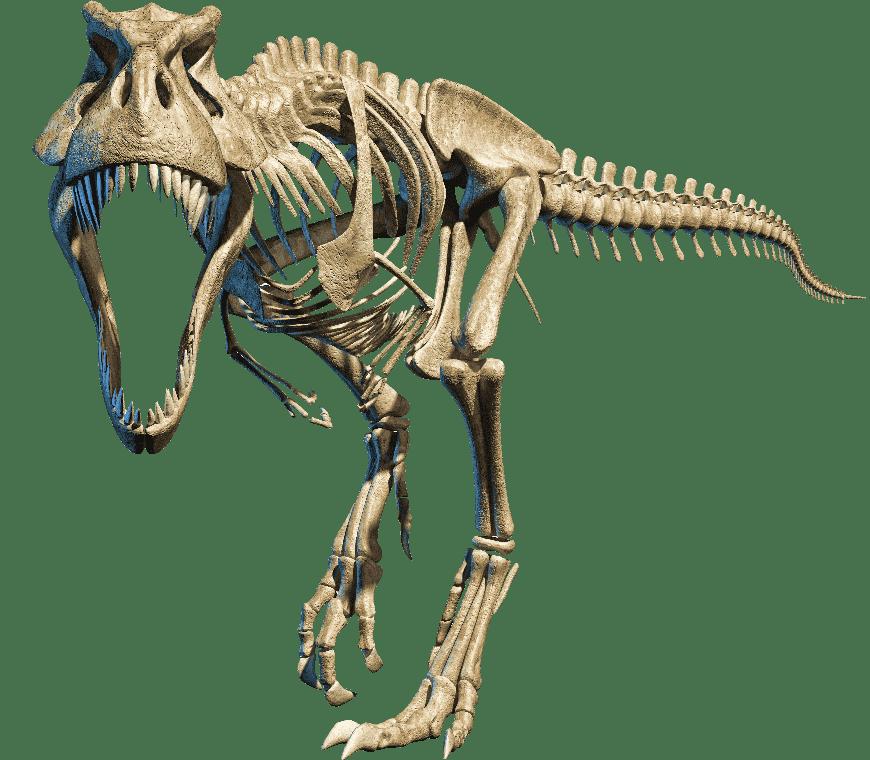 Dinos Legeland - T-rex skelet